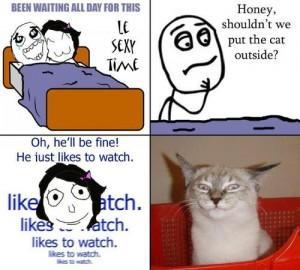 funny cat porn